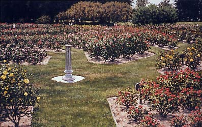 San Jose Municipal Rose Garden, a painting by Janet Kruskamp