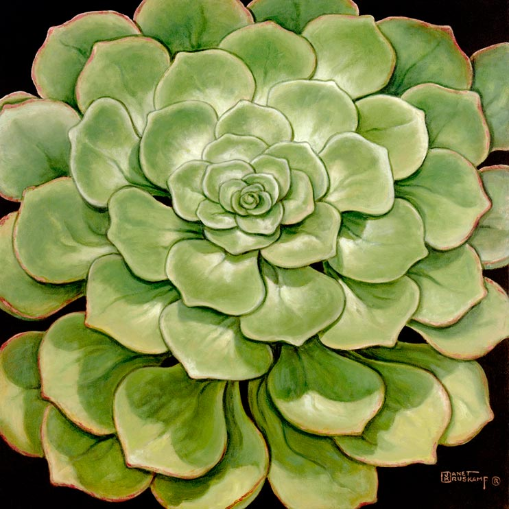 Janet Kruskamp's Paintings - Succulent I, a painting of a beautiful green succulent, shiny and plump. The broad green leaves radiate out in a layered pattern, larger leaves ringing the outside of the plant. One of the Still Life Gallery of original oil paintings or  original paintings by the artist, Janet Kruskamp