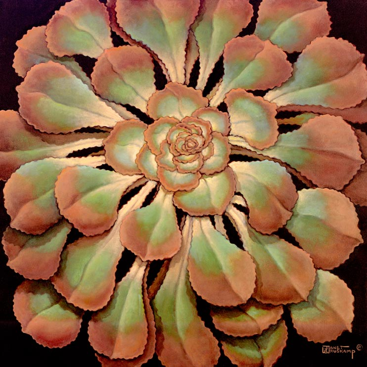 Janet Kruskamp's Paintings - Succulent II, a painting of a beautiful green and brown succulent, shiny and plump. The broad green leaves with reddish-brown tips radiate out in a layered pattern, larger leaves ringing the outside of the plant. One of the Still Life Gallery of original oil paintings or  original paintings by the artist, Janet Kruskamp